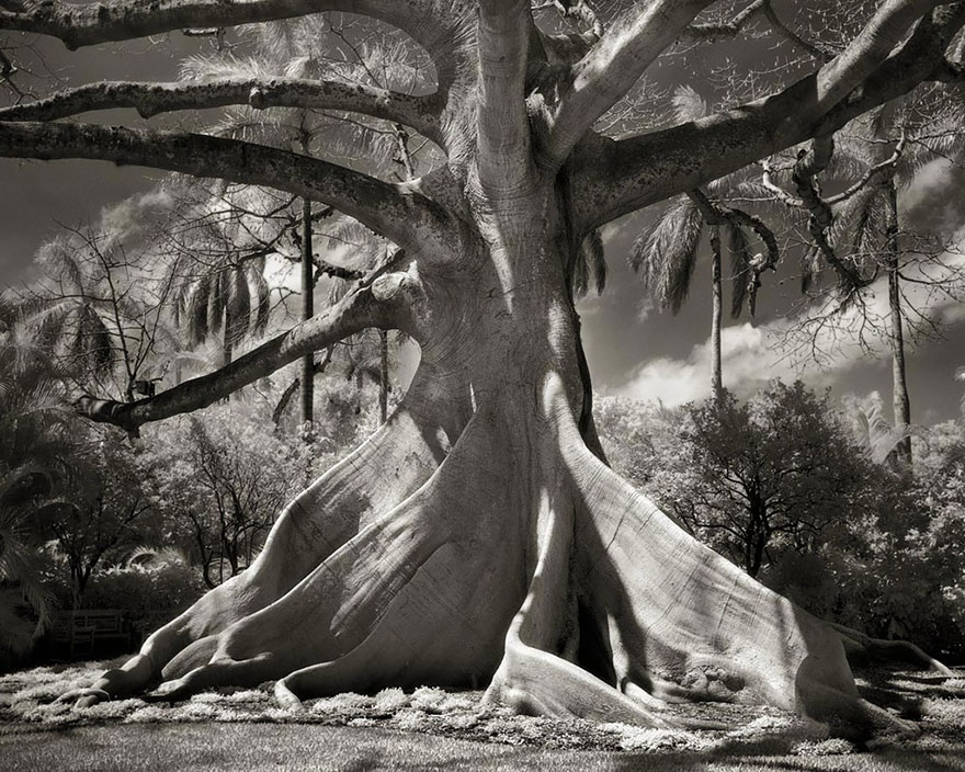 ancient-trees-beth-moon-10