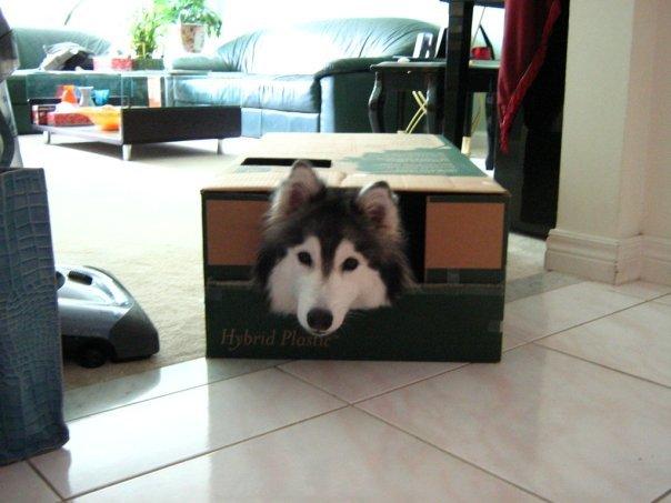 husky scatola 2