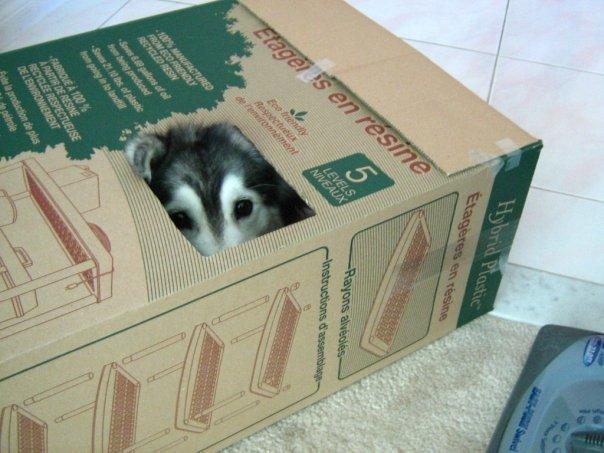 husky scatola