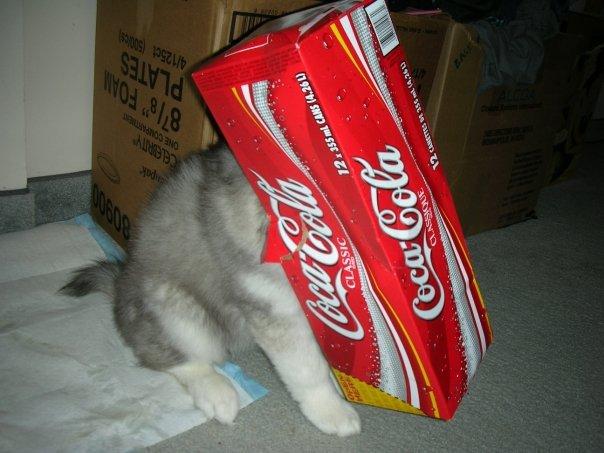 trucchi gatto