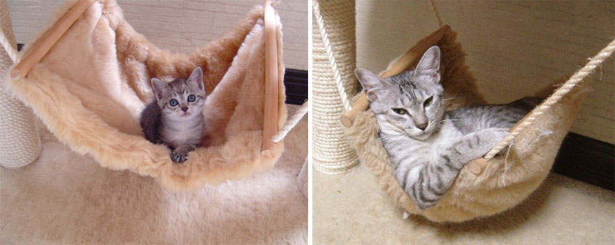before-and-after-growing-up-cats-14__880