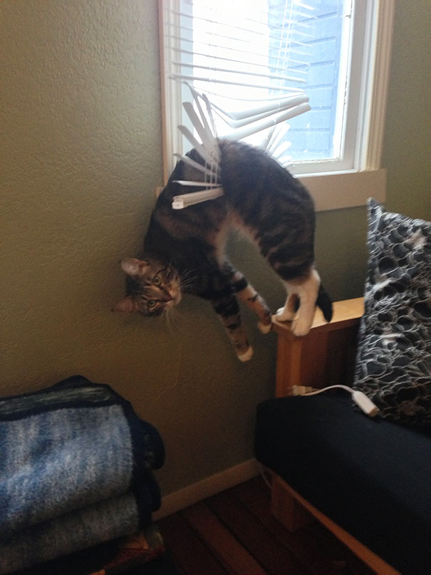 funny-cat-fails-4__605