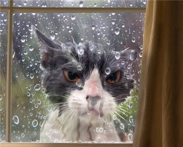 funny-cat-fails-511__605