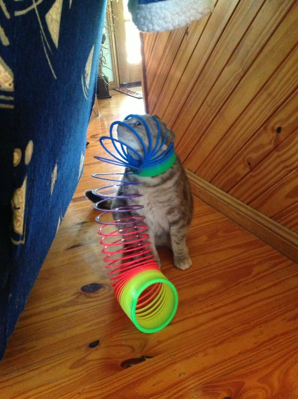 funny-cat-fails-7__605